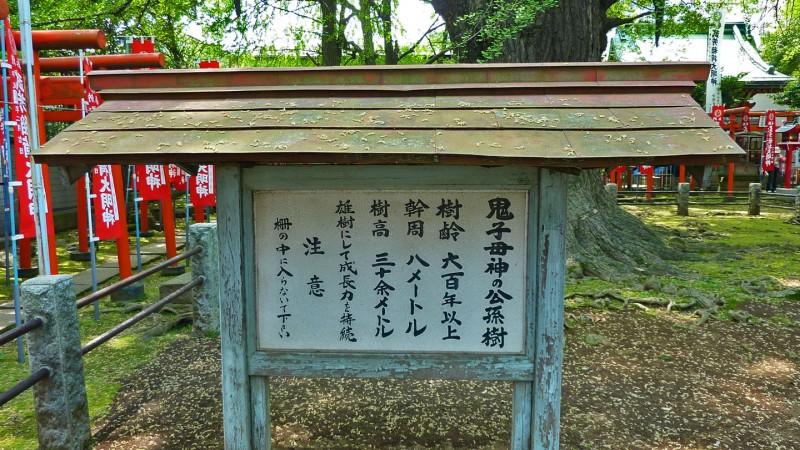 shinto inari jinja torii