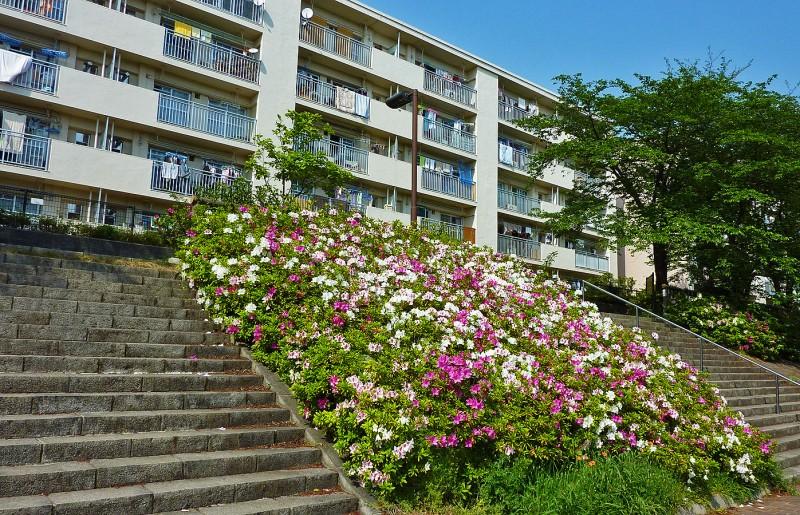 shakujii apartment complex on shakujiigawa river tsutsuji azalea