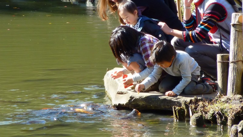 japanese kids koi tokyo