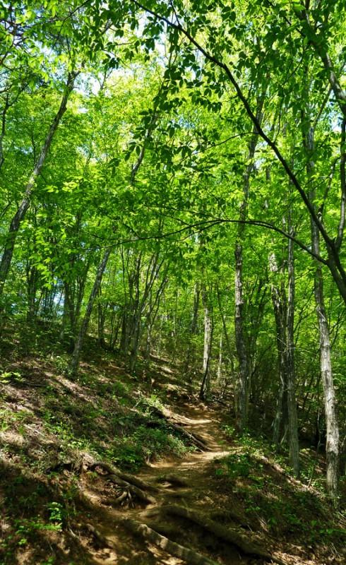 hiking mt. kuratake mount mountain otsuki japan yamanashi