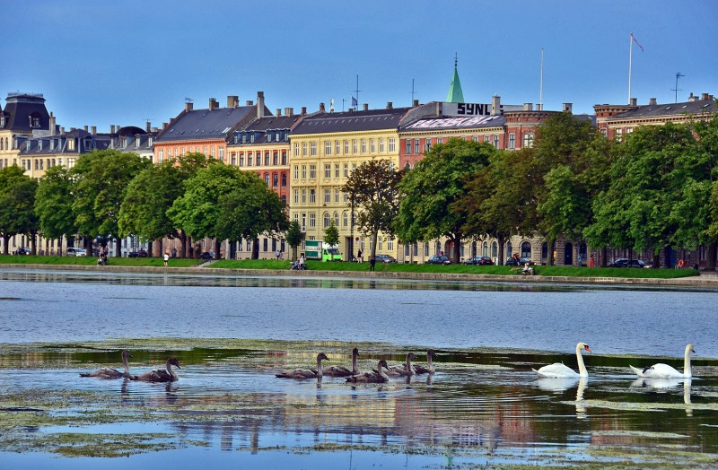 the ugly ducklings copenhagen denmark lake
