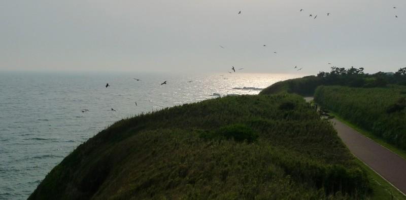 birds on jo island japan
