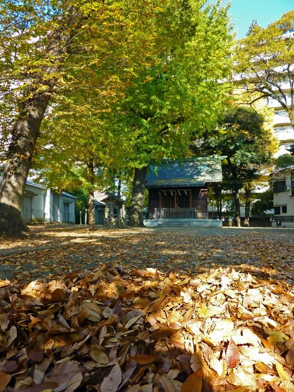 koyo japanese leaves autumn