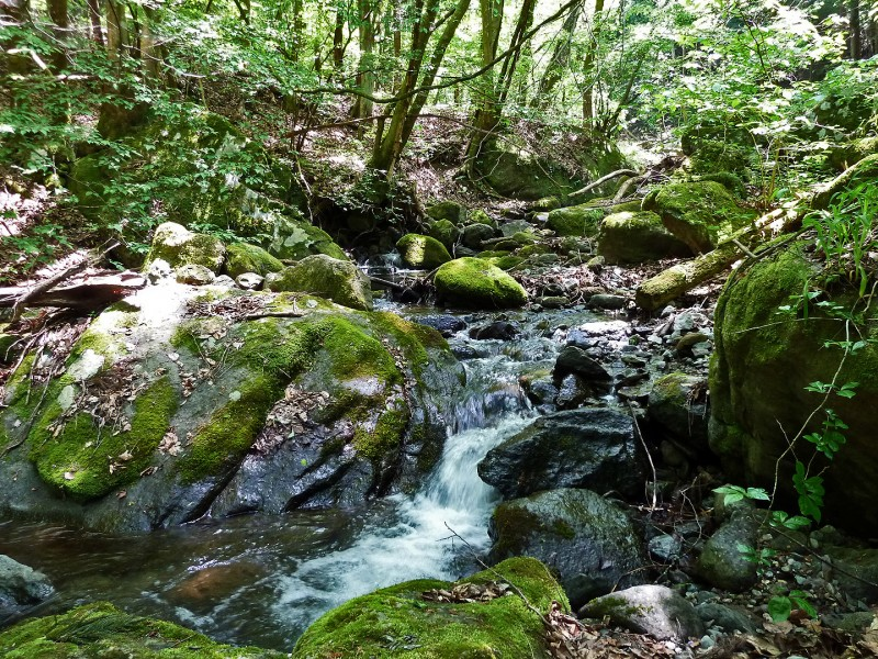 green mossy river stream