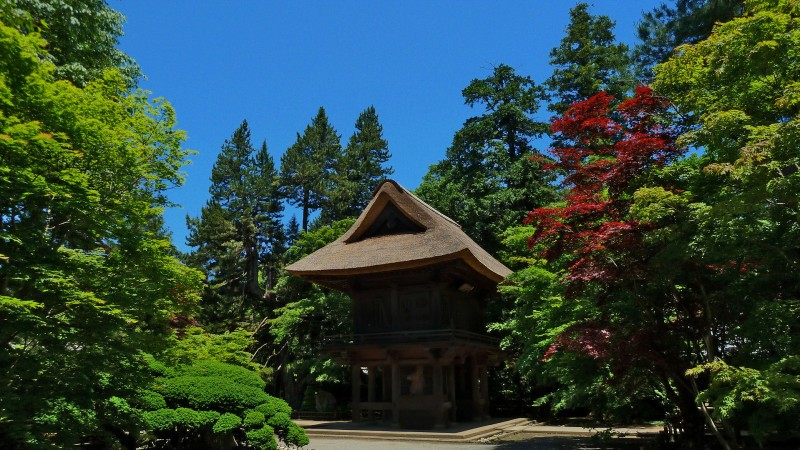 tokyo area buddhist temple in forest nature japan