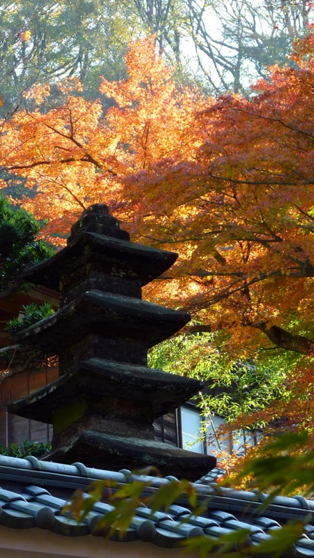 japan stone lantern tiles roof orange fall color kamakura temple