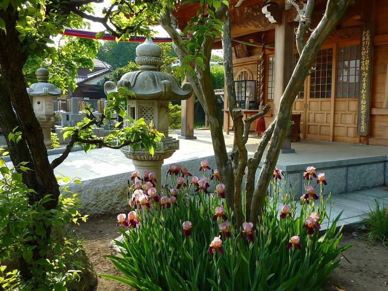 shrines in tokyo buddhist temple iris