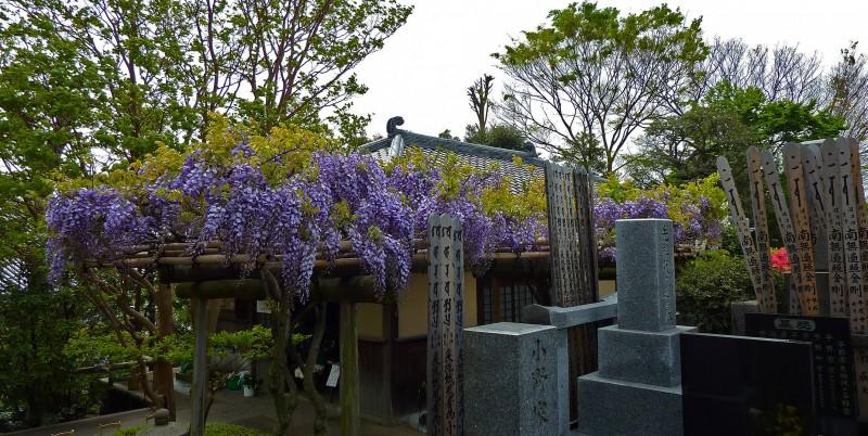 薬王院 yakuoin tokyo japan flowers