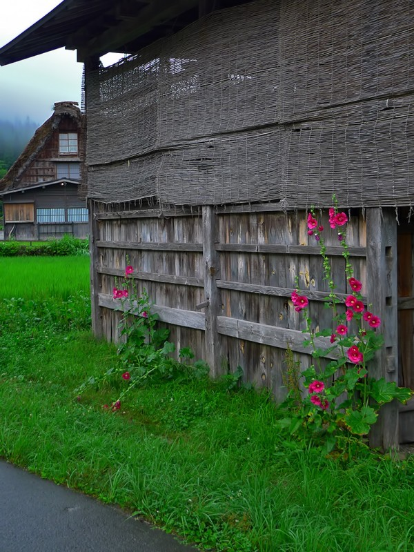 old buildings in japan thatched roof farm house rice fields