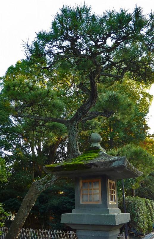 japanese scene stone lantern kamakura matsu