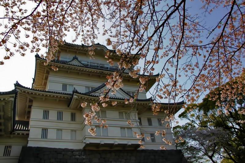 odawara japan sakura