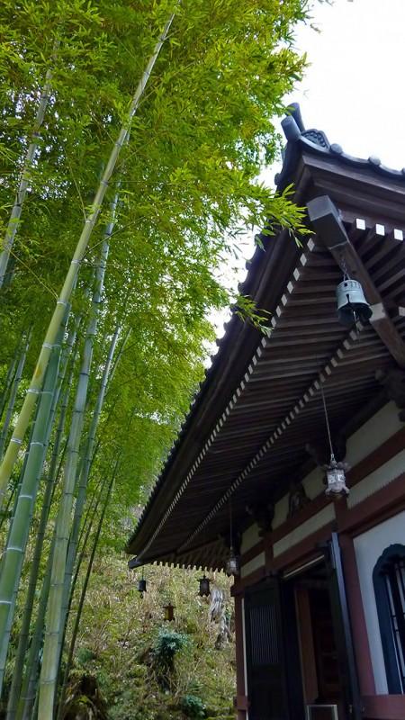 buddhist temple kamakura japan take bamboo