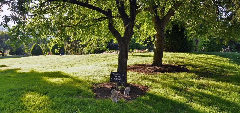 boston common please stay off the grass squirrels