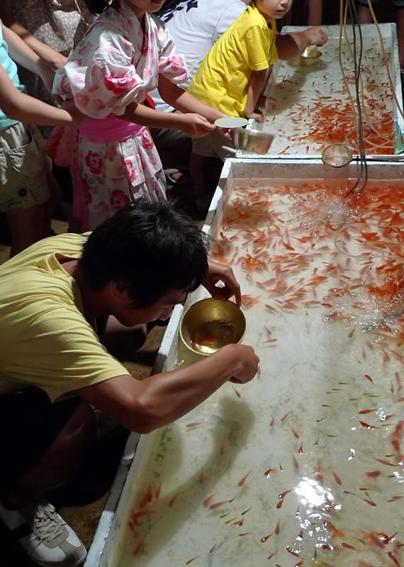 matsuri goldfish