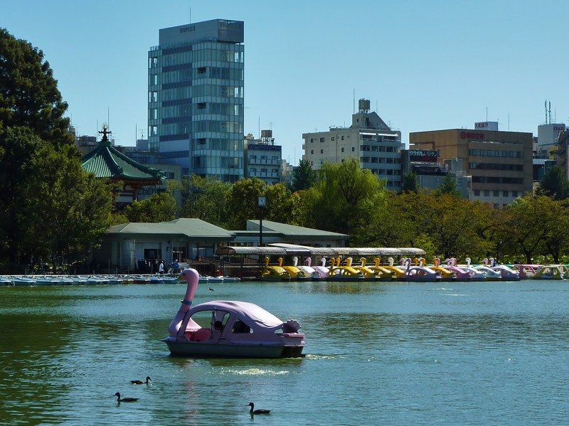 不忍池 ueno ducks shinobazu swan boat shinobaze pond
