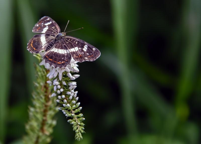 gwangju mudeungsan mt mudeung butterfly