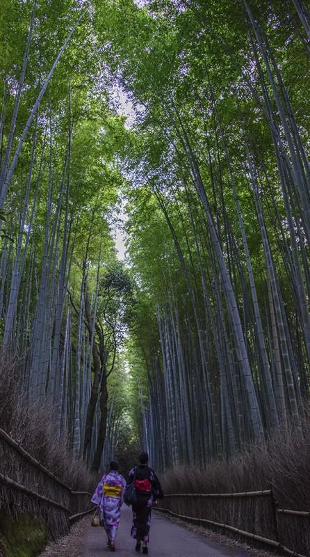 kyoto bamboo forest path yukata girls