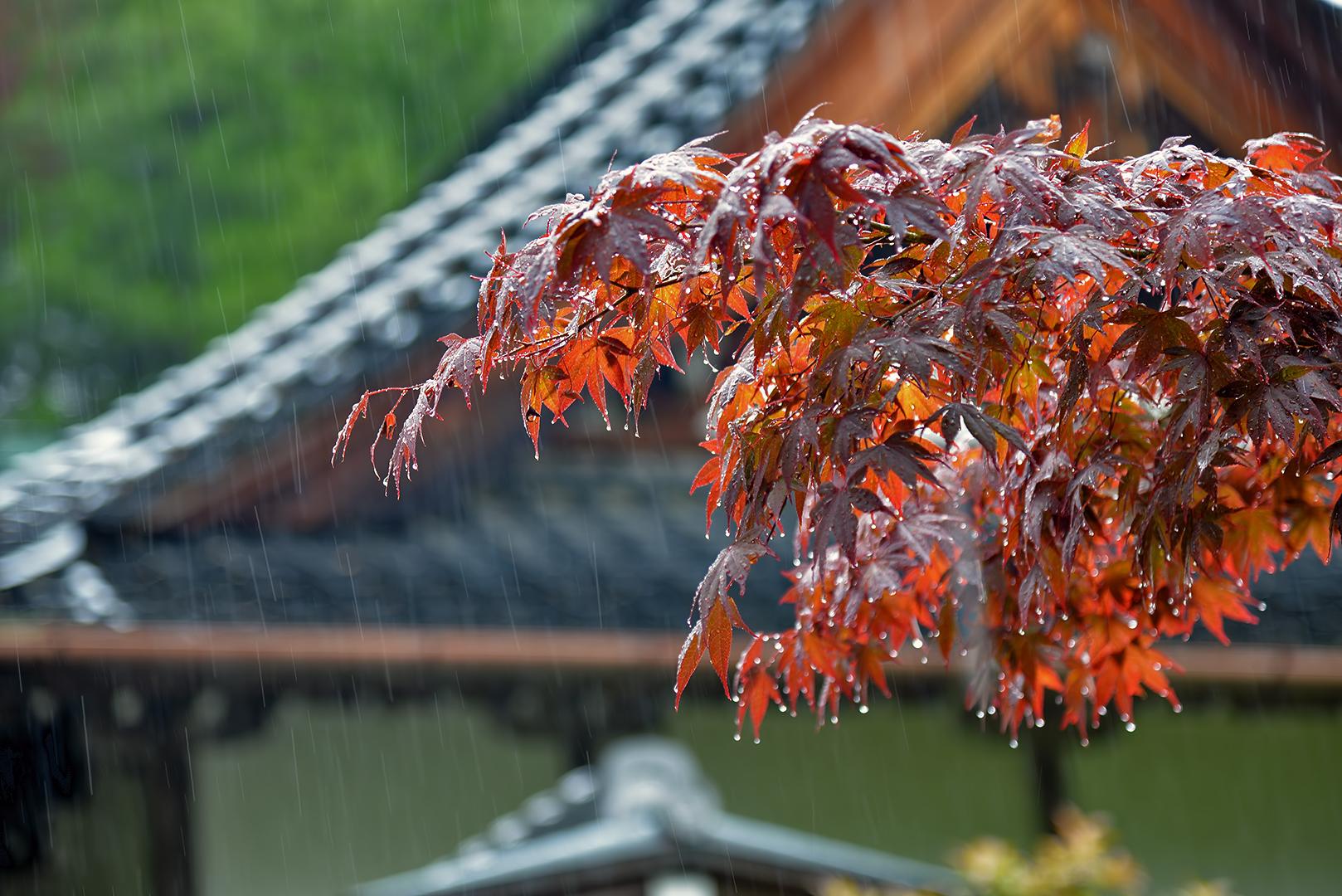 Daisho-in Mount Misen 弥山 miyajima rain japanese maples