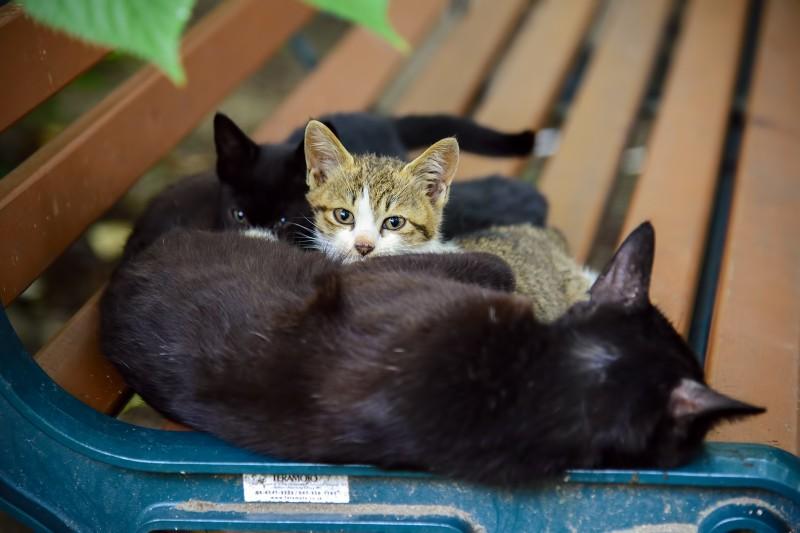 shofukuji kittens cats japan