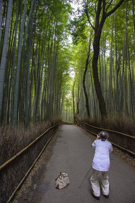 bamboo path kyoto arashiyama japanese photographer