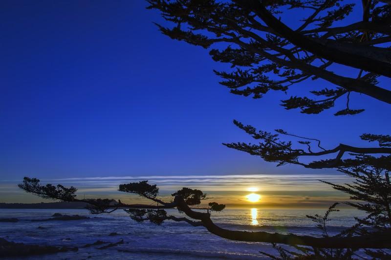 carmel sunset through cyprus tree
