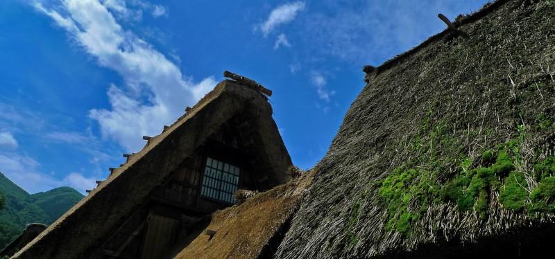 shirakawago gasshozukuri thatched roof moss