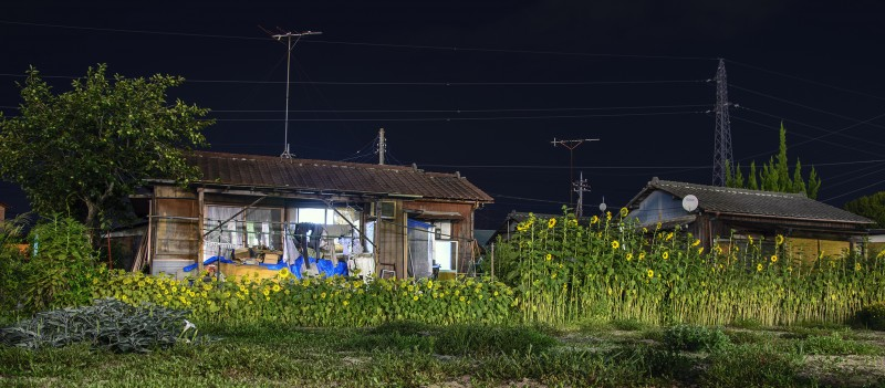 himawari sunflowers kofu kai yamanashi japan night