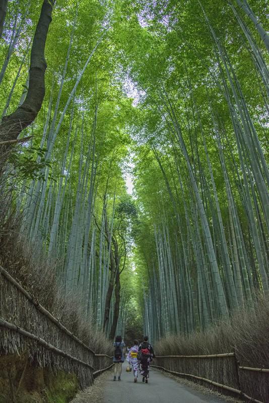 嵯峨野竹林 kyoto bamboo forest arashiyama