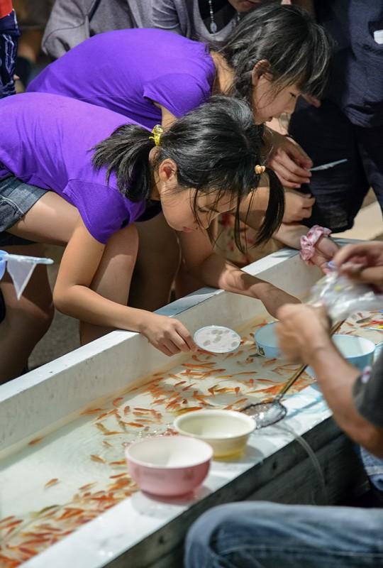 金魚を飼う japan matsuri panning gold fish inuyama hanabi taikai