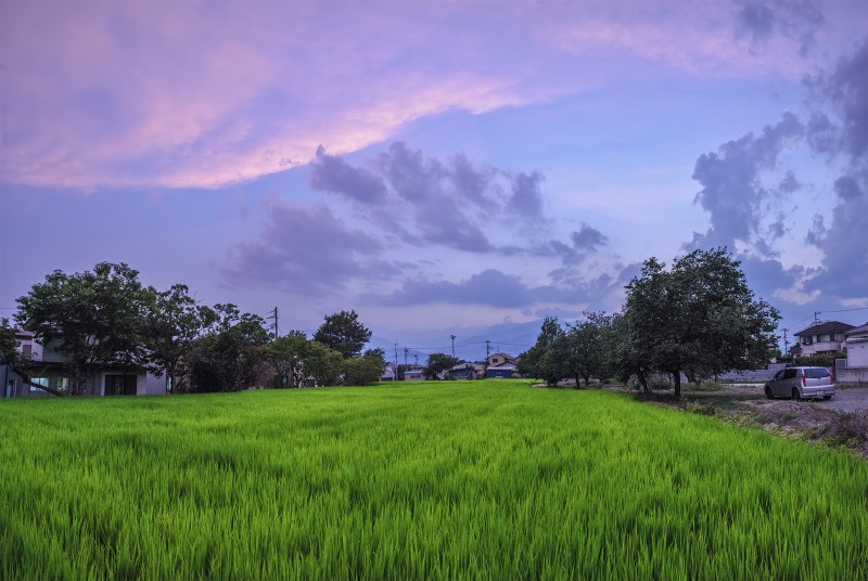 PHOTOMERGE panorama rice paddy dusk kofu