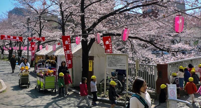 cherry blossoms sakura edogawa tokyo yochien