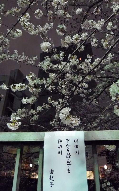 yukiko kandagawa sakura haiku