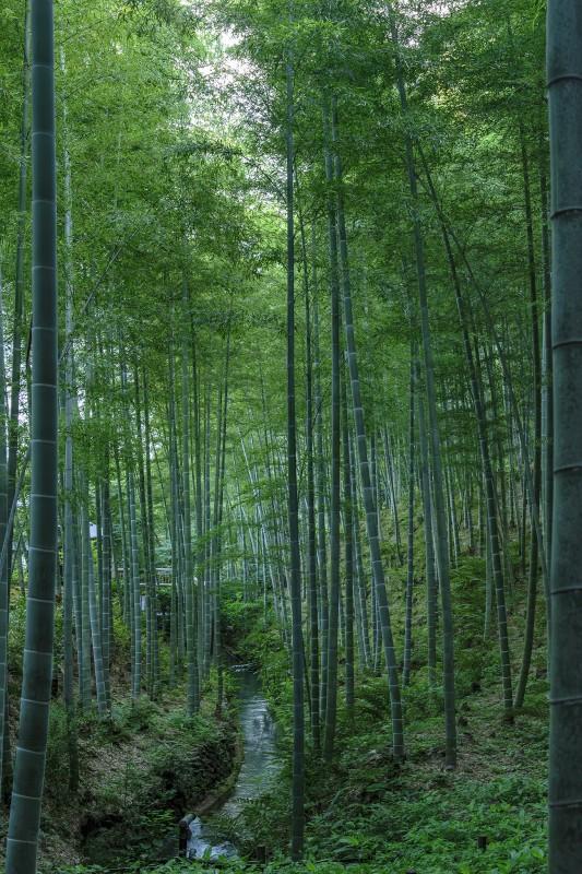 kyoto bamboo stream