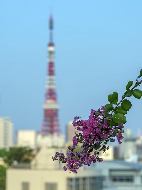 tokyo tower flower