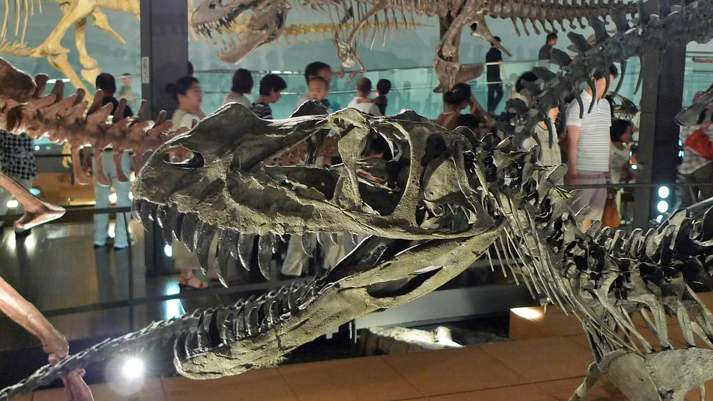 恐竜 National Museum of Nature and Science Tokyo
