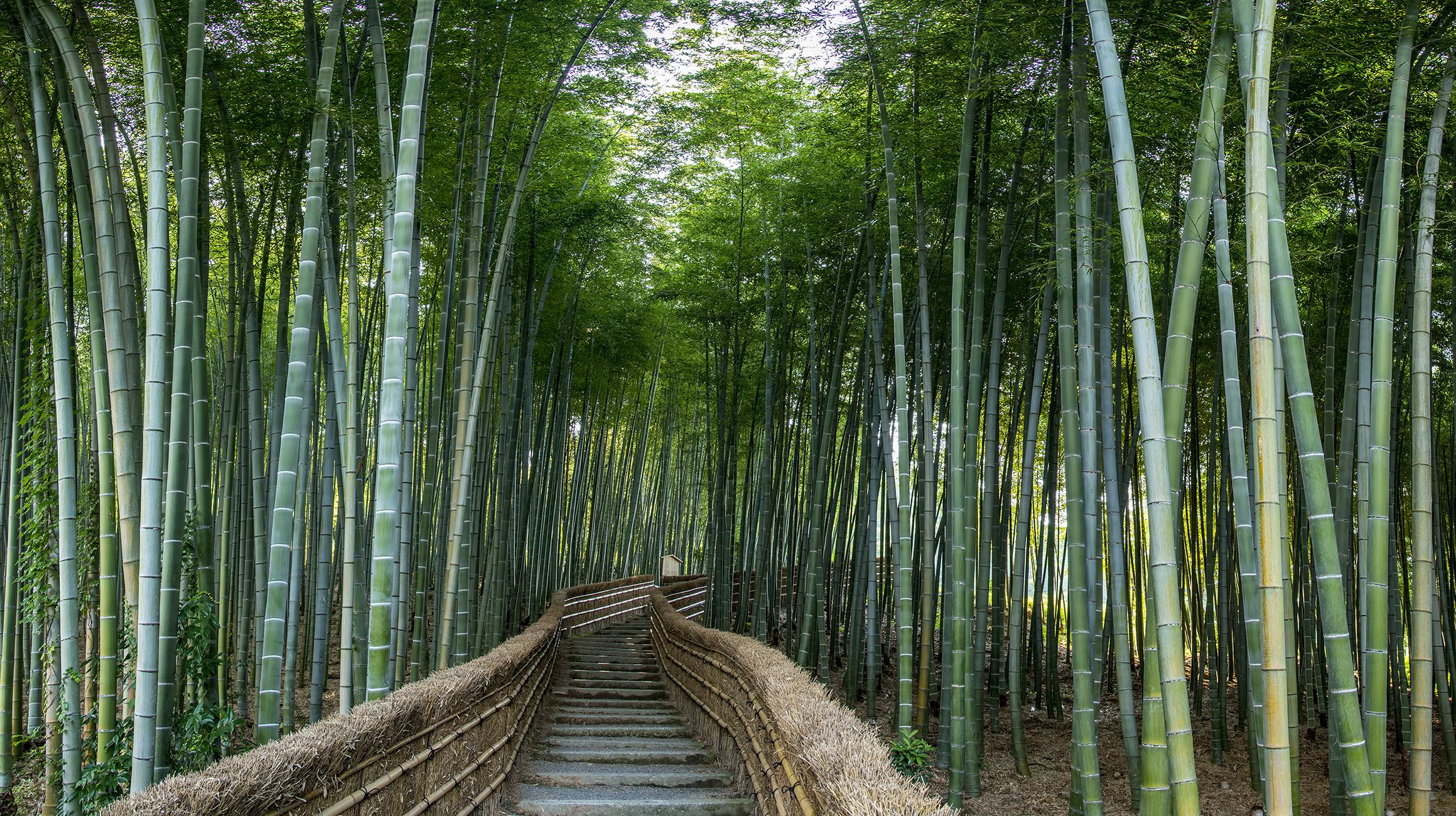 Five Photo Photomerge Bamboo Stairs Nenbutsuji