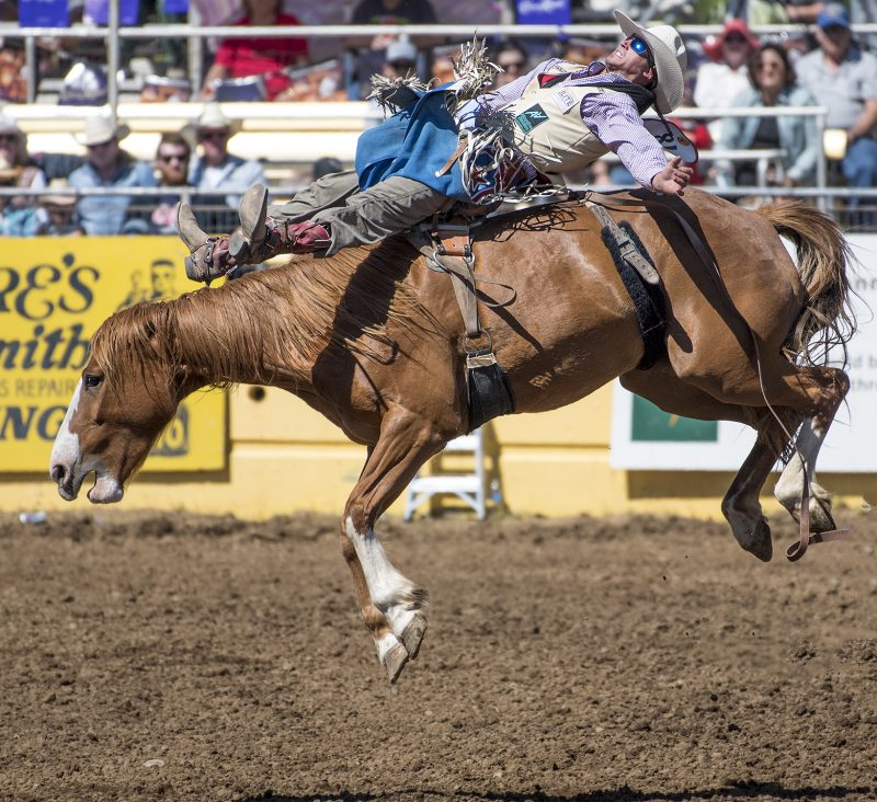 red bluff round-up rodeo bareback tray chabliss iii