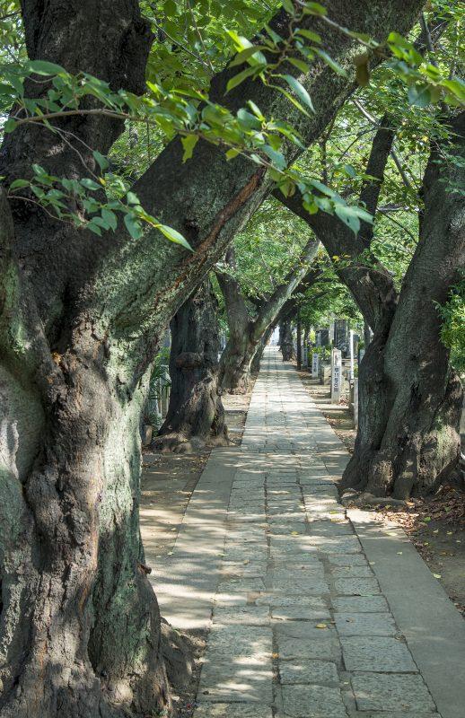 yanaka-graveyard-tokyo-old-trees