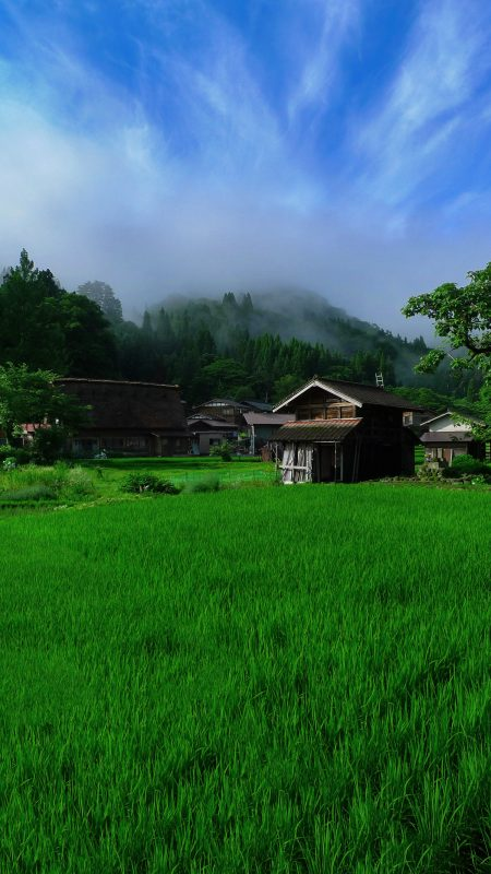 shirakawago rice-field