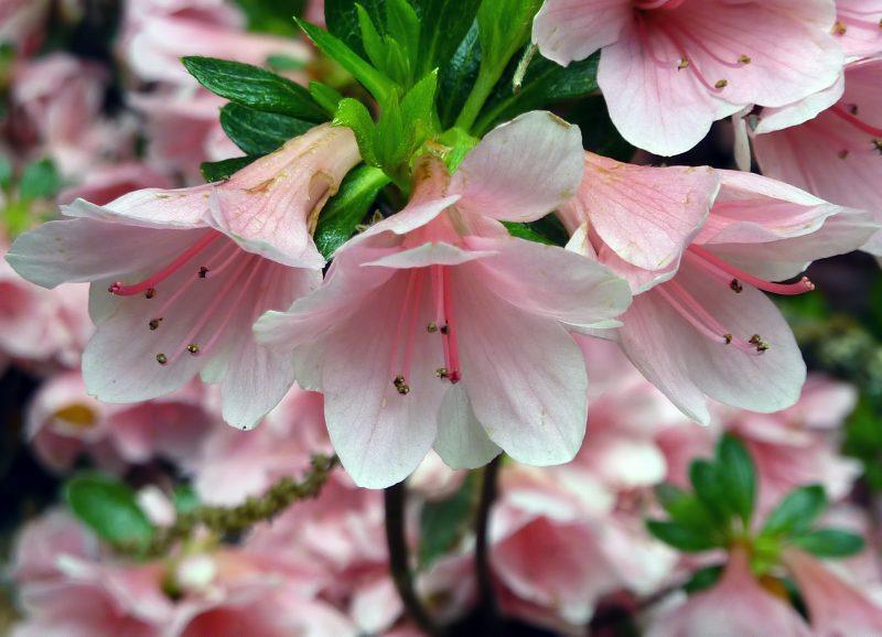 東長谷寺 flower shinjuku tokyo japan