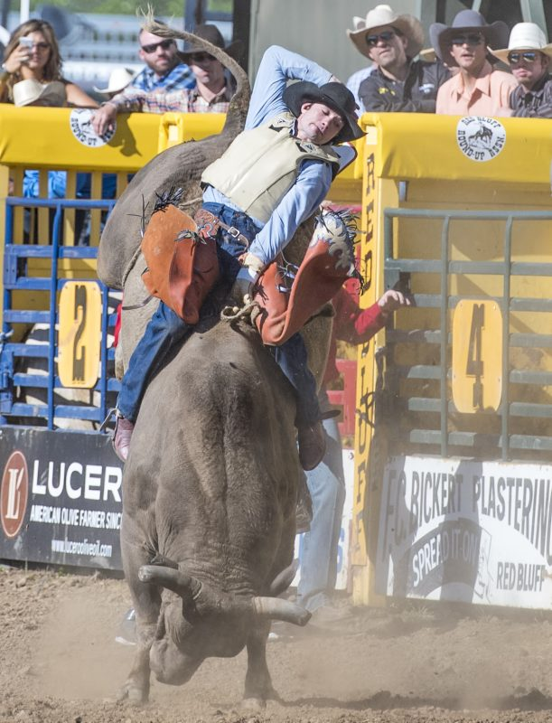 red bluff round up rodeo bull riding