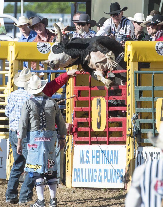 bull riding shoot
