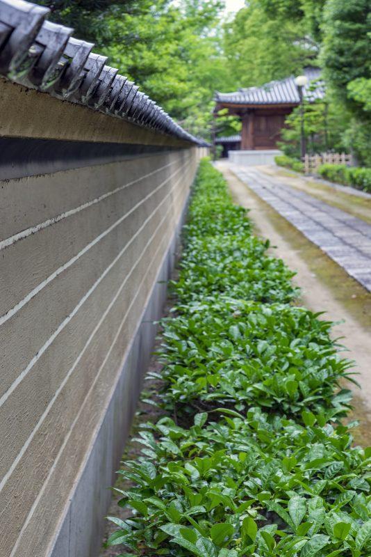 shofukuji fukuoka wall