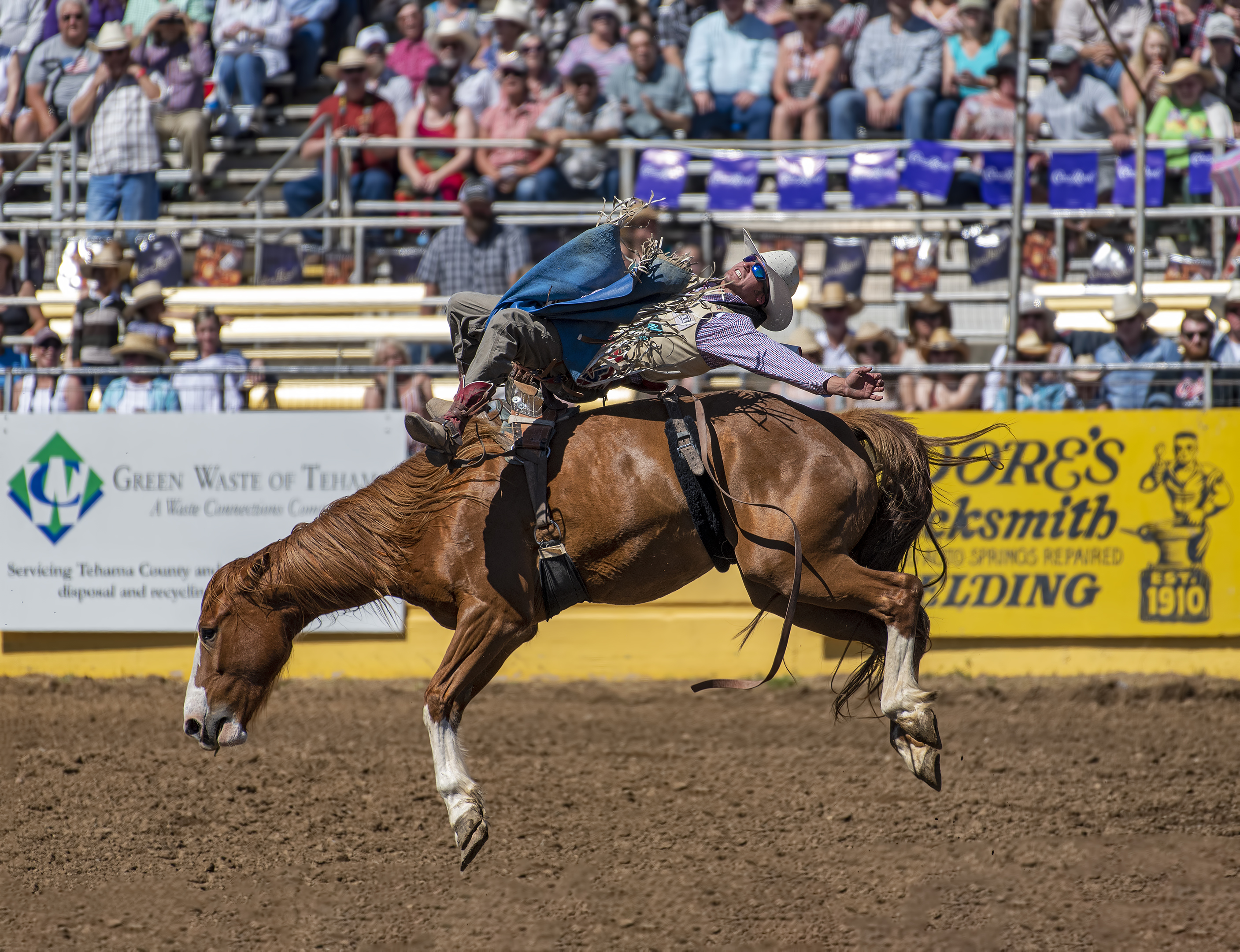 Tray Chambliss III on Lilly Loose Lips red bluff roundup rodeo bronco riding