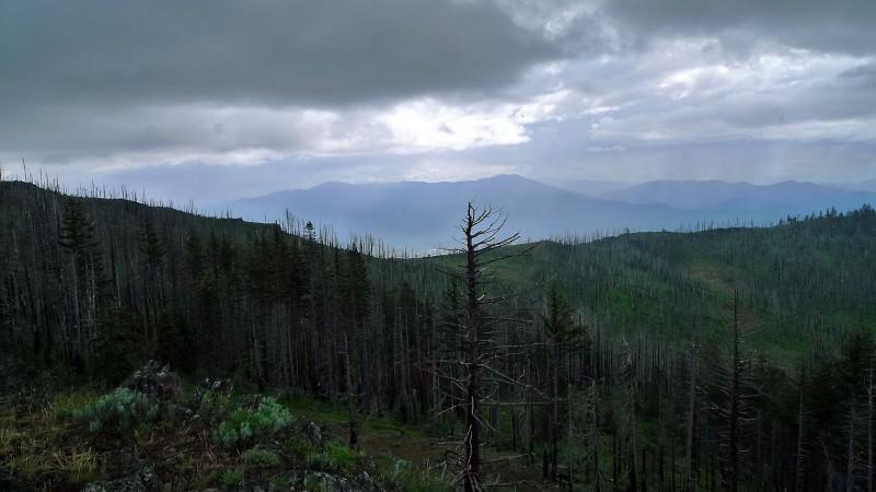 grizzly peak dead trees burned ashland oregon fire