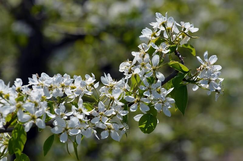 macro photography flowers