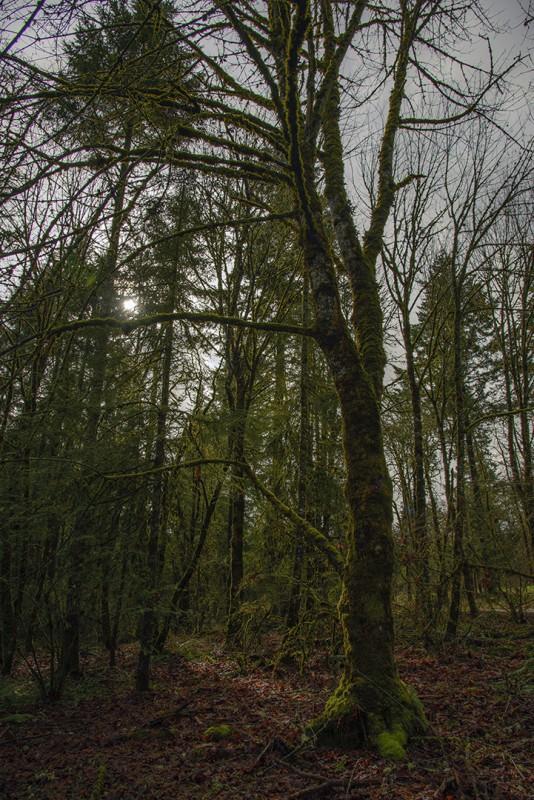diamond woods golf course oregon monroe trees moss