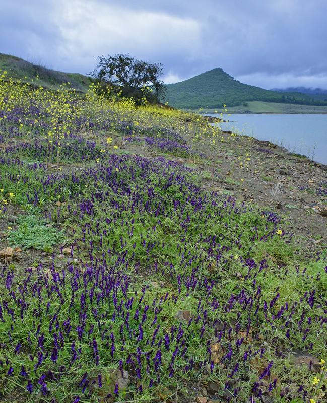 2014 Ashland Tri Regatta emigrant lake wildflowers