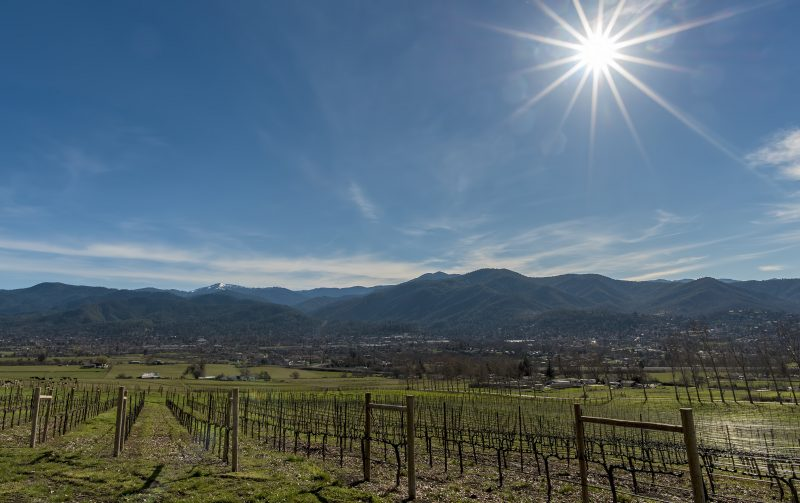 dana campbell vineyards ashland
