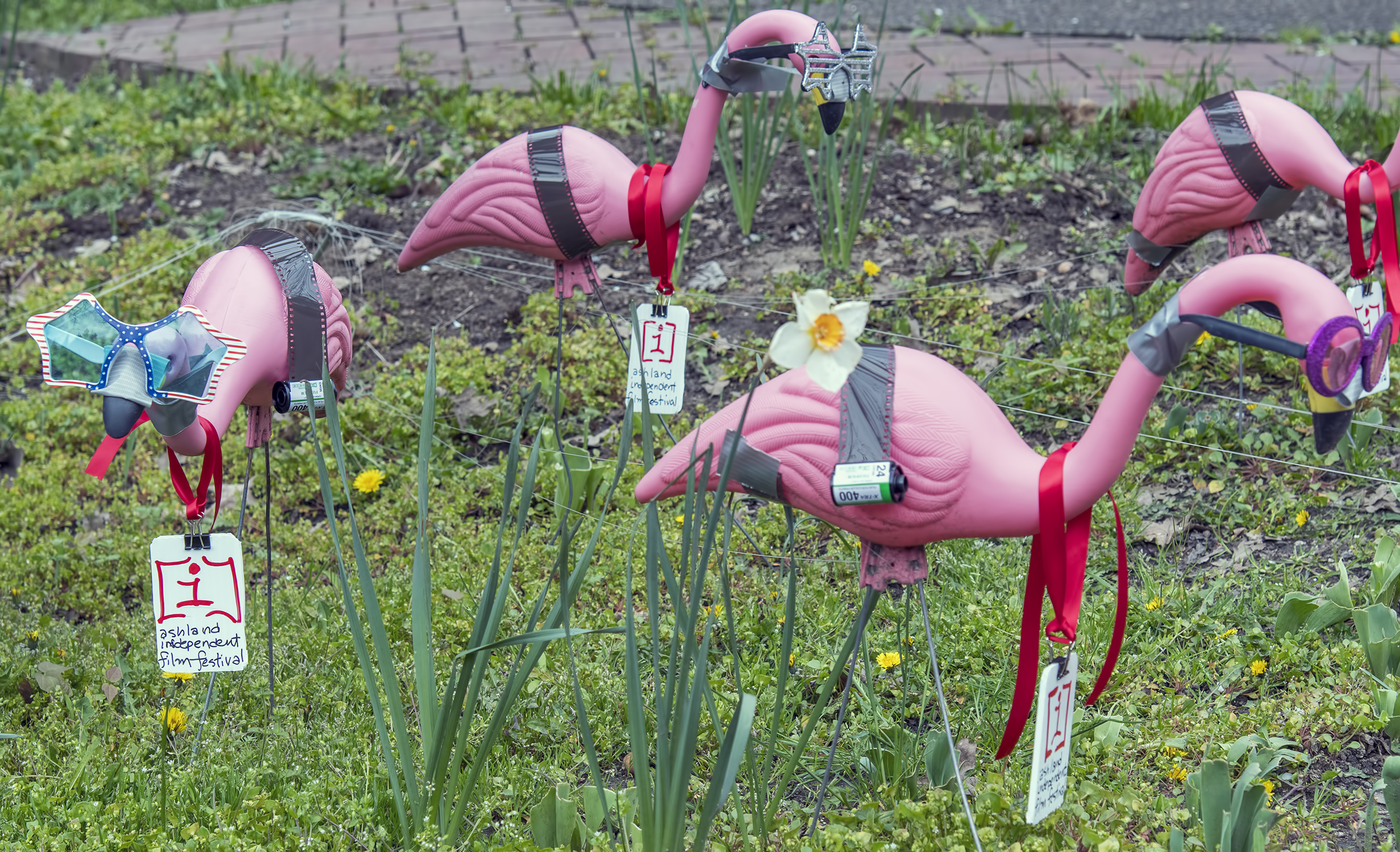 Aiff Ashland Independent Film Festival Al Case Pink Flamingo Lawn Ornaments